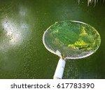 Small photo of Harmful algae bloom in an aquaculture pond