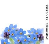 forget me not. myosotis. hand... | Shutterstock .eps vector #617785556