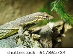 Small photo of Photo of Agamas sitting on branch