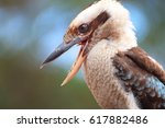 a beautiful kookaburra with an... | Shutterstock . vector #617882486