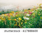 field of colorful flowers with... | Shutterstock . vector #617888600