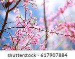 sakura flowers. | Shutterstock . vector #617907884