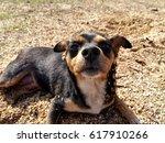 happy dog | Shutterstock . vector #617910266