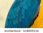 Texture Of Macaw Feathers...