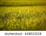green fields of wheat in spring.... | Shutterstock . vector #618012218