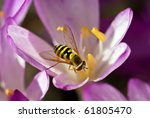 Close Up Of Hover Fly...