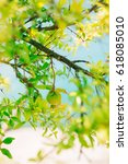 the medium sized pomegranate... | Shutterstock . vector #618085010