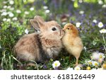 Stock photo best friends bunny rabbit and chick are kissing 618126449