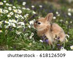 Stock photo cute bunny rabbit in colorful meadow 618126509