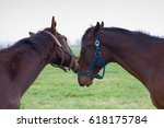 two young horse fighting ... | Shutterstock . vector #618175784