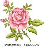 Stock vector vector illustration of pink rose for design 618202649