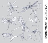 Set Of Various Dragonflies In...