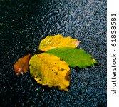 beautiful colored autumn leafs... | Shutterstock . vector #61838581