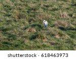 Lost English Wiltshire Lamb