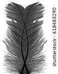 Abstract Symbol Black Feather...