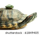 Little and big turtle on white background - stock photo