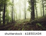 green woods with trees in fog | Shutterstock . vector #618501434