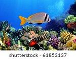 doublebar bream  acanthopagrus... | Shutterstock . vector #61853137