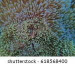 nemo under the sea | Shutterstock . vector #618568400