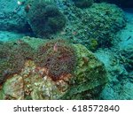 sea anemones and nemo | Shutterstock . vector #618572840