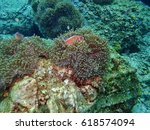 sea anemones and nemo | Shutterstock . vector #618574094