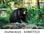 A Black Bear In The Forest. Bi...