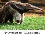 giant anteater  myrmecophaga... | Shutterstock . vector #618634868