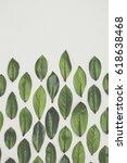 green leaves arrangement... | Shutterstock . vector #618638468