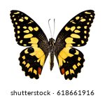 Stock photo lime butterfly papillio demolus top view on white background 618661916