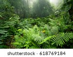 morning in a cloud forest  also ... | Shutterstock . vector #618769184