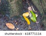 leaves | Shutterstock . vector #618771116