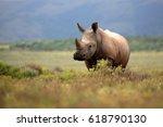A white rhino   rhinoceros...