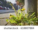 roadside weeds  dandelions ... | Shutterstock . vector #618807884