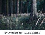 mysterious forest | Shutterstock . vector #618832868