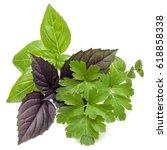 fresh herb leaves variety... | Shutterstock . vector #618858338