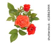 orange rose flower bouquet with ... | Shutterstock . vector #618863444