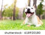 Stock photo friendly dog smile 618920180