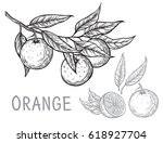 vector set oranges hand drawn... | Shutterstock .eps vector #618927704