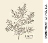 background with juniper ... | Shutterstock .eps vector #618937166