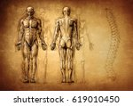 human anatomy drawing  old ... | Shutterstock . vector #619010450