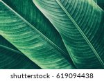 tropical leaves texture... | Shutterstock . vector #619094438