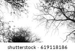 tree  branches isolate on white | Shutterstock . vector #619118186