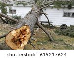 Small photo of Tree from storm damages laying on a house