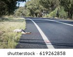 kangaroo dead on the rural road ... | Shutterstock . vector #619262858
