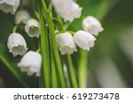 Lily Of The Valley. Garden...