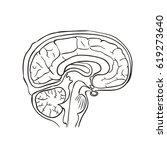 brain vector illustration | Shutterstock .eps vector #619273640