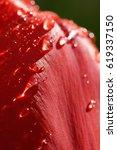 macro of the upper rim of a... | Shutterstock . vector #619337150