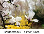 white magnolia flowers in front ... | Shutterstock . vector #619344326