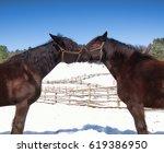 horses nuzzling   Shutterstock . vector #619386950
