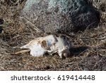 A Close Up Photograph Of The...
